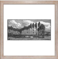 Poplars in France - Ready Framed